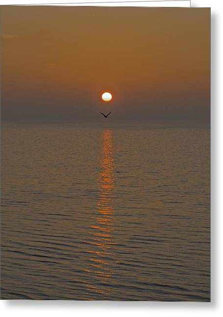 Seagull At First Light Greeting Card by Gary Eason