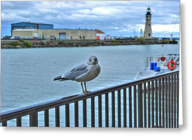 Greeting Card featuring the photograph Seagull At Lighthouse by Michael Frank Jr