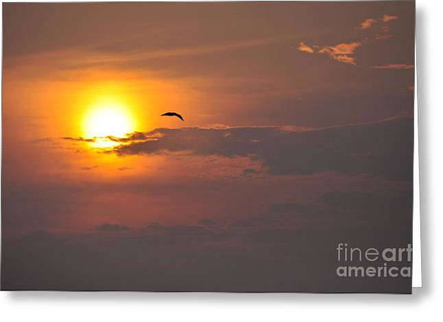 Seagull At Sunset Greeting Card by Fred Fishkin
