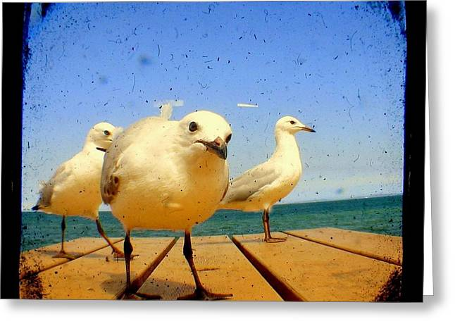 Seagull At The Beach - Ttv  Greeting Card by Tracy Milchick