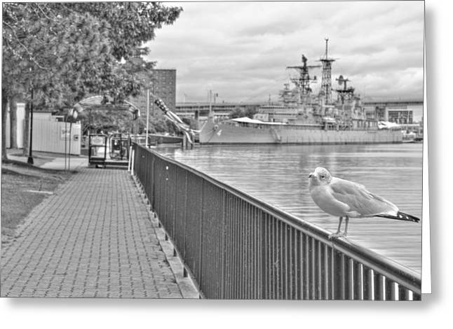 Greeting Card featuring the photograph Seagull At The Naval And Military Park by Michael Frank Jr