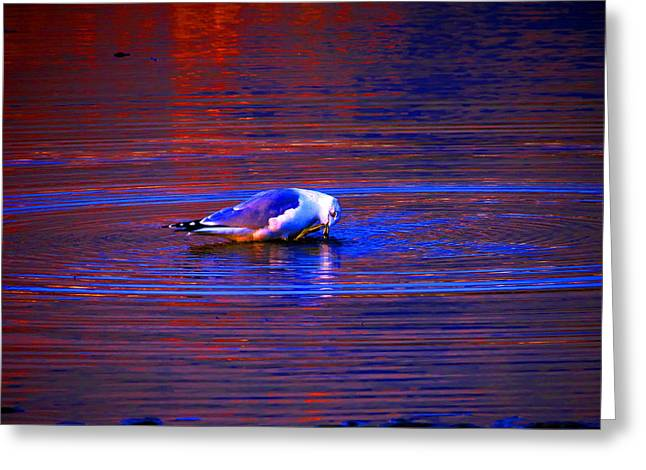 Seagull Bathing In Dramatic Light Greeting Card by Catherine Natalia  Roche