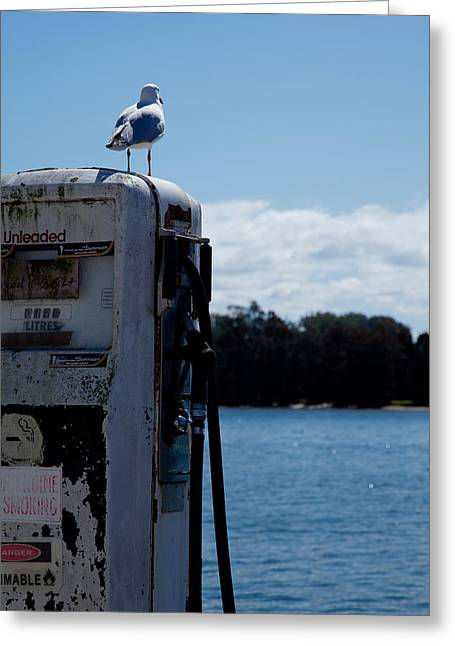 Greeting Card featuring the photograph Seagull by Carole Hinding