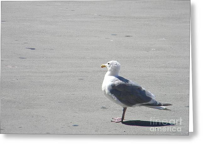 Seagull Greeting Card by Derek Swift