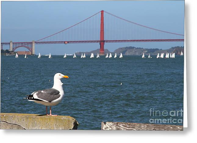 Seagull Enjoying The Sailboats On The San Francisco Bay . 7d14041 Greeting Card by Wingsdomain Art and Photography