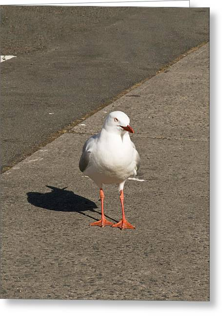 Seagull In The Summer Sun Greeting Card by U Schade