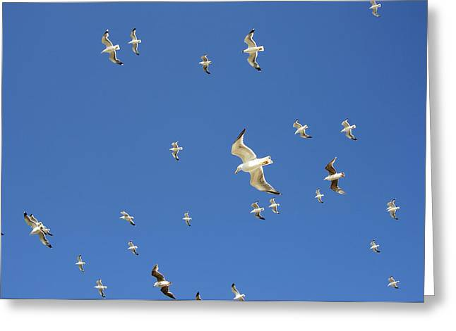 Seagull Greeting Card by Johnny Greig