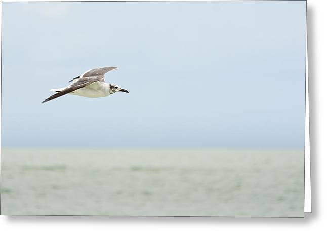 Seagull Greeting Card by Mike Rivera