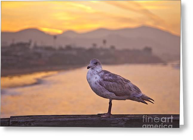 Seagull On Boardwalk Railing Greeting Card