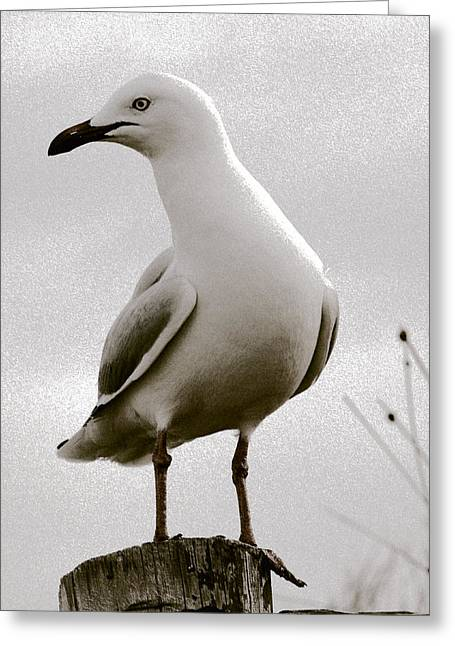Seagull On Post Greeting Card by Serene Maisey