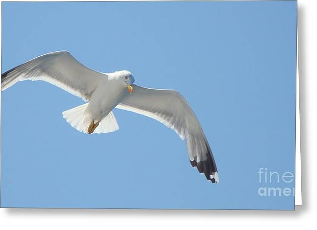 Seagull On The Sky Greeting Card by Olga R