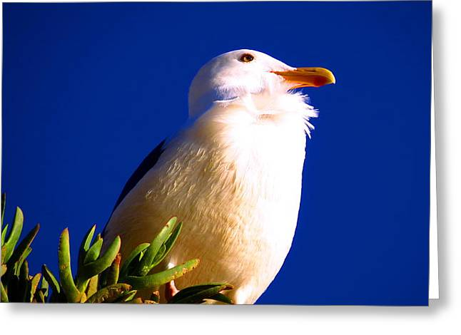 Seagull On Top Greeting Card by Catherine Natalia  Roche