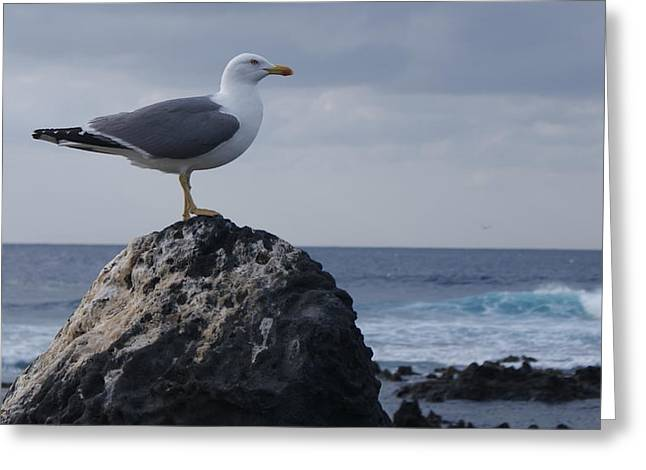 Seagull Greeting Card by Luis and Paula Lopez