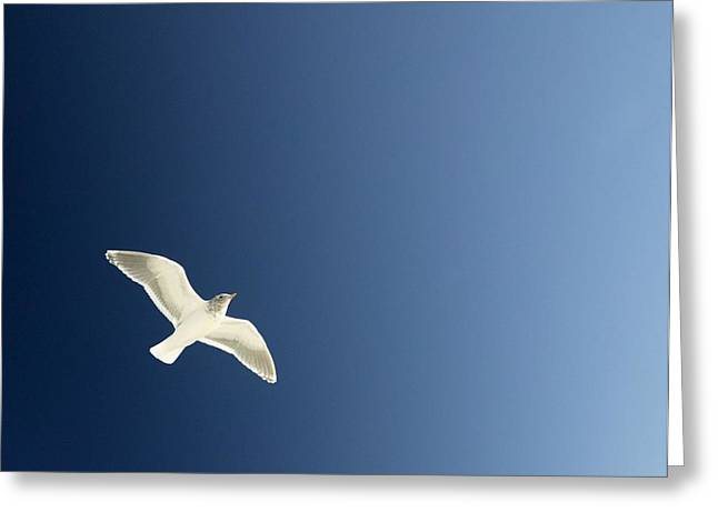 Seagull Soaring Greeting Card by Con Tanasiuk