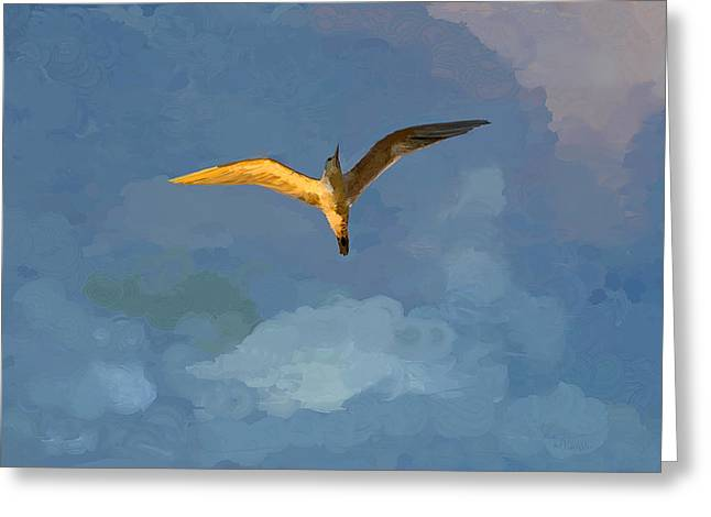 Seagull Sunrise Greeting Card by Miguel Pumarejo