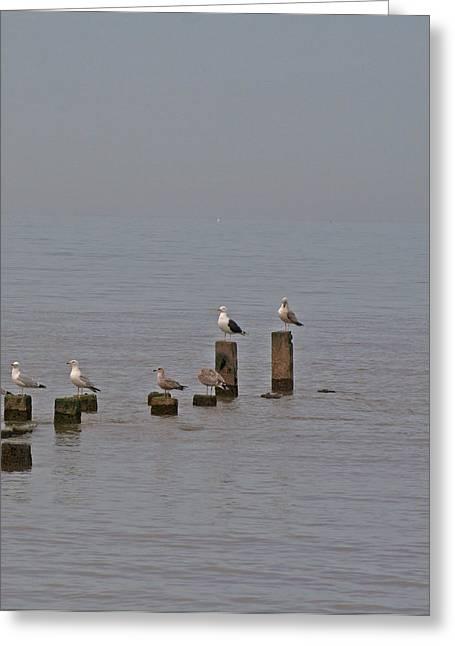 Seagulls At Rest Greeting Card by Camera Rustica Bill Kerr