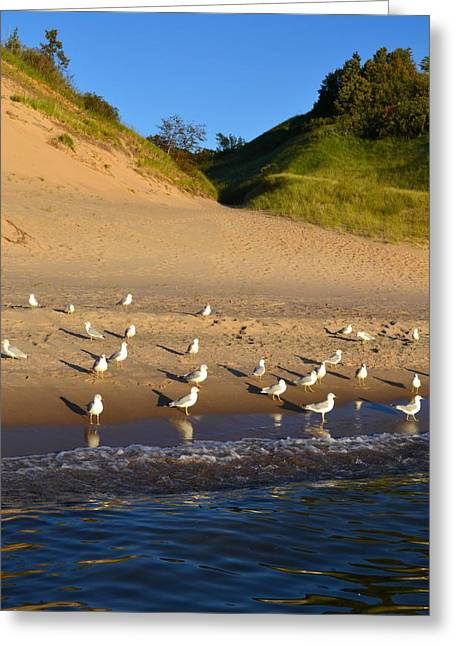 Seagulls At The Bowl Greeting Card by Michelle Calkins