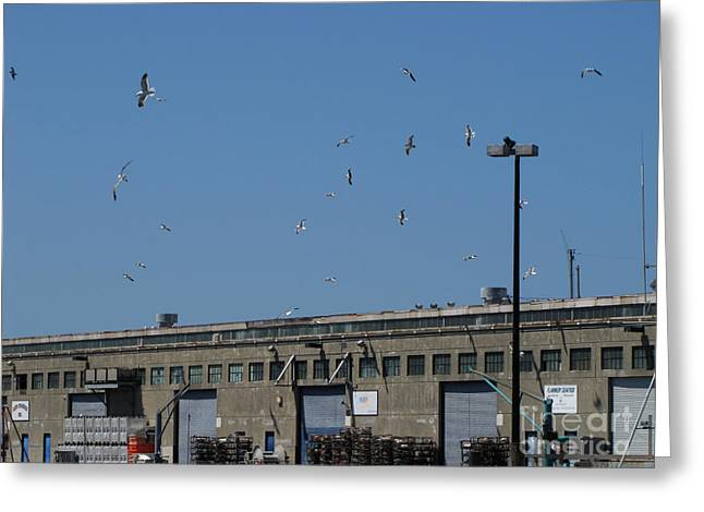 Seagulls By The Pier Greeting Card by Serena Ballard