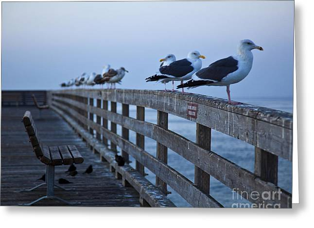 Seagulls On Boardwalk Railing Greeting Card
