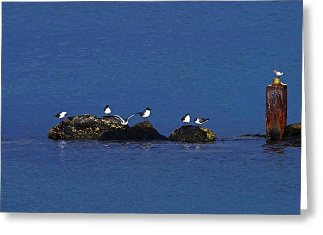 Greeting Card featuring the photograph Seagulls On Rocks-2- St Lucia by Chester Williams