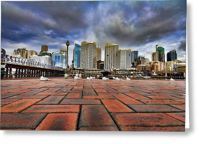Seagull's Perspective Greeting Card by Douglas Barnard