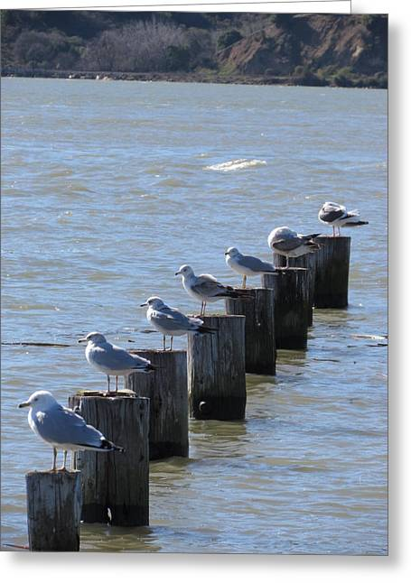 Seagulls Rest Greeting Card