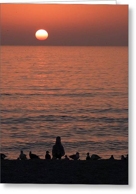 Seagulls Watching Sunset Greeting Card