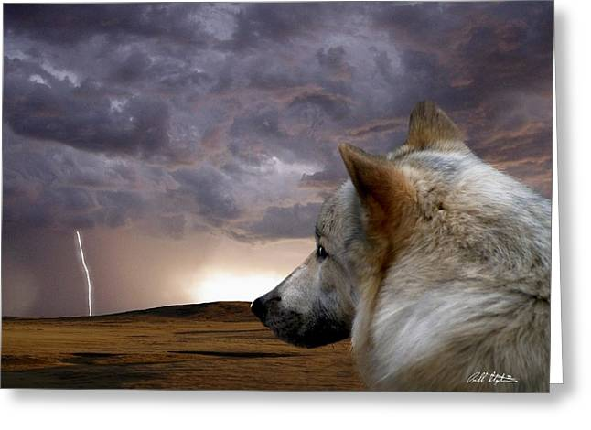 Searching For Home Greeting Card by Bill Stephens