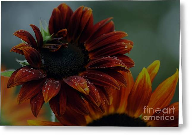 Searching For Sunshine 2 Greeting Card by Marjorie Imbeau