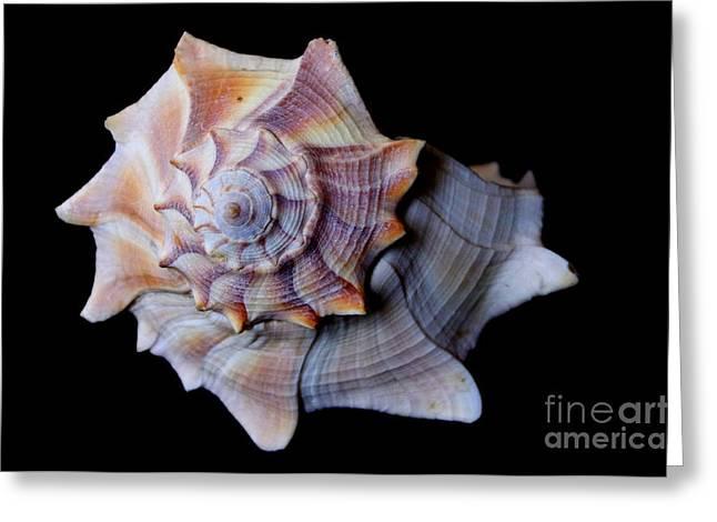Greeting Card featuring the photograph Seashell 5 by Deniece Platt