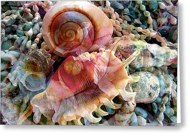 Seashell Reflections Greeting Card by Shirley Sirois