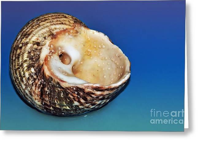 Seashell Wall Art 2 Greeting Card by Kaye Menner