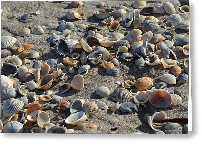 Seashells In The Sand Greeting Card by Brenda Thimlar