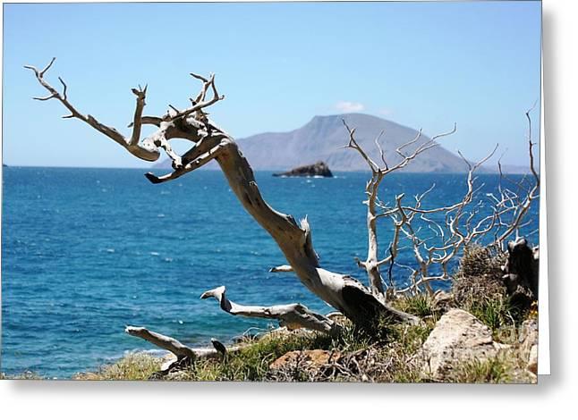 Seaside Tree Greeting Card by Phoenix Michael  Davis