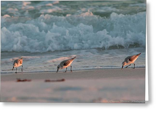 Greeting Card featuring the photograph Seaside Trio by Charles Warren