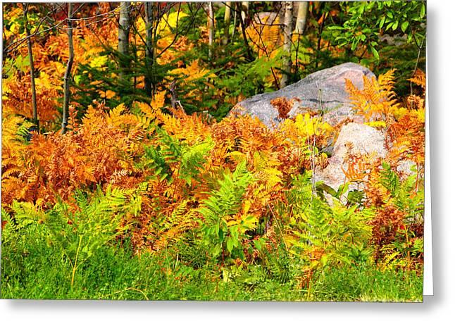 Seasonal Change Greeting Card by George Ramondo