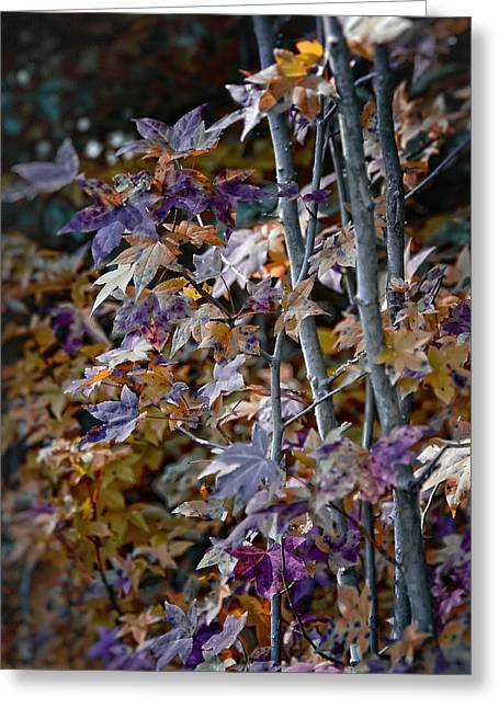 Seasonal Changes Greeting Card by Michael Putnam