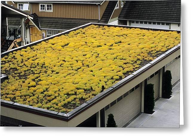 Sedum Green Roof Greeting Card
