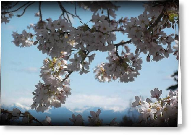 See The Cascades Greeting Card by Lee Yang