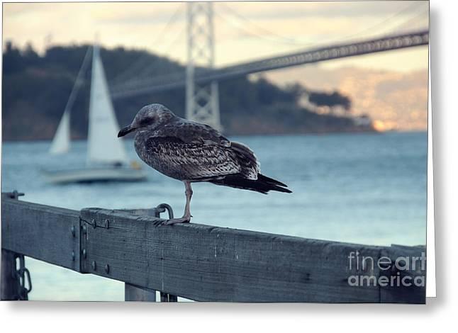 Seegull At The Bay Bridge San Francisco Greeting Card by Design Remix