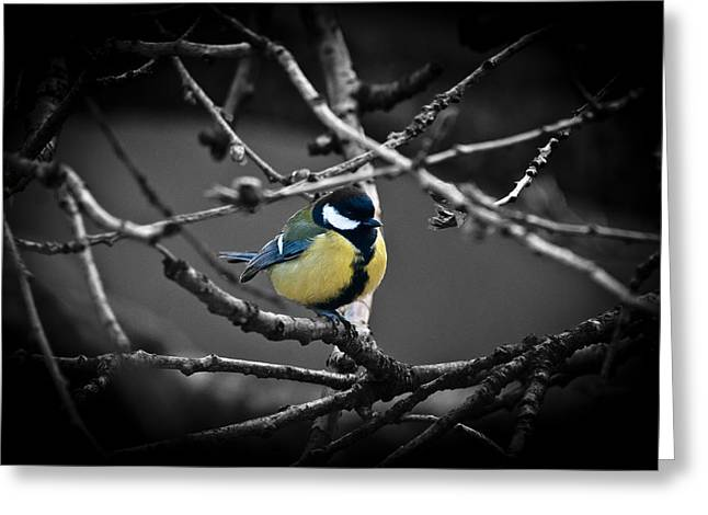 Selective Bird Greeting Card by Chris Boulton