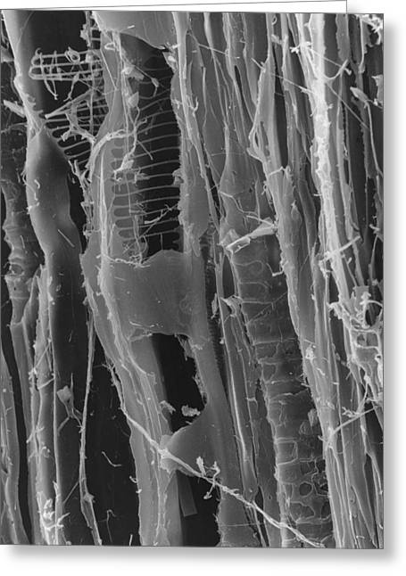Sem Of Dry Rot In Plywood Greeting Card by Creit: Dr Jeremy Burgess