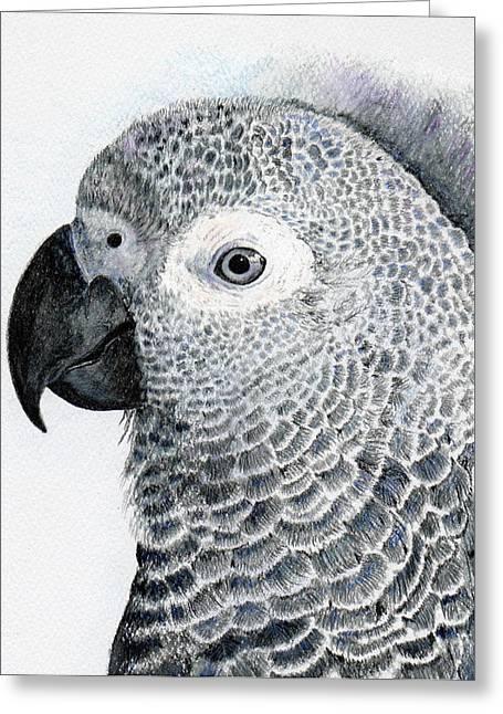 Sensitive African Grey Greeting Card by Barb Kirpluk