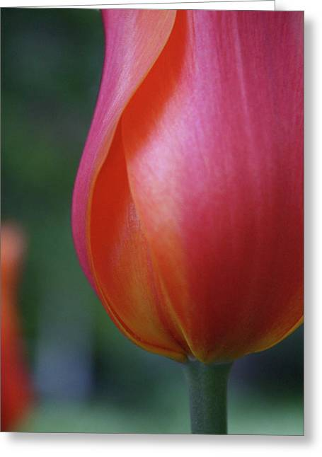 Sensual Orange Greeting Card by Cathie Douglas