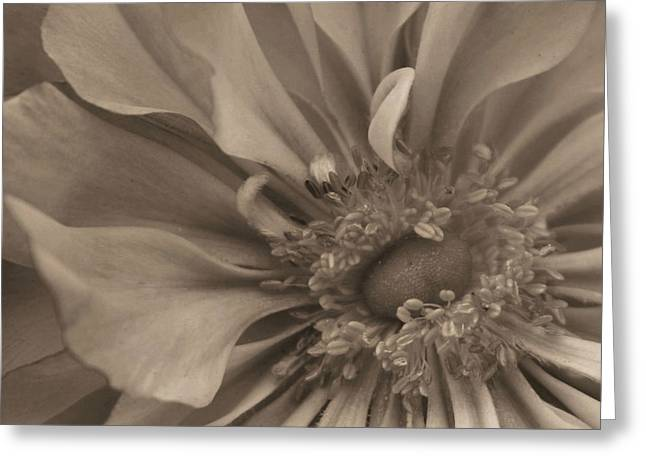 Sepia Floral Greeting Card by Kristin Elmquist