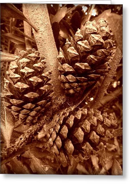 Sepia Pine Cones Trio Greeting Card by Cindy Wright