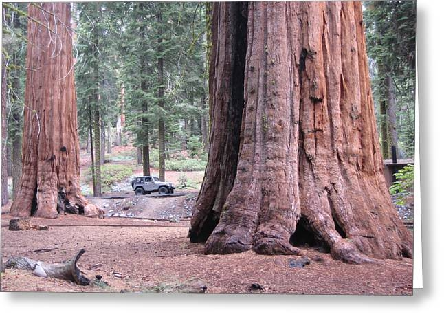 Sequoia  Trees 2 Greeting Card by Naxart Studio