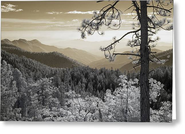 Sequoia View Greeting Card