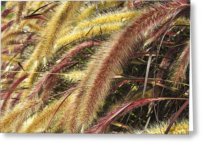 Greeting Card featuring the digital art Setaria Italica Red Jewel - Red Bristle Grass by Anne Mott