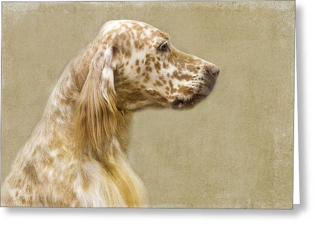 Setter 2 Greeting Card